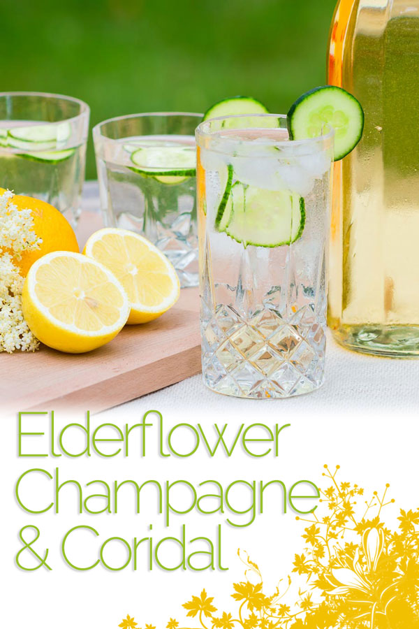 4 Simple Ingredients and you have elderflower champagne, what's not to like. The core ingredient is free and the rest of the ingredients are store cupboard favourites!
