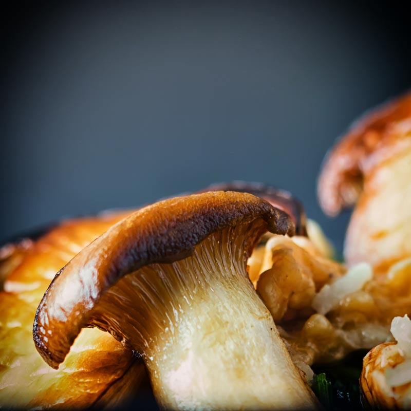 Close up image of a french horn mushroom AKA king oyster mushroom